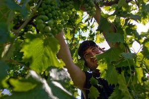 Wineries upgrade facilities to stand out