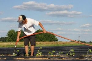 Agriculture mentors focus on field work