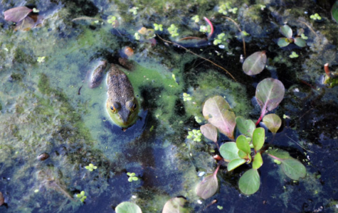 Odor lingers around Campus Lake