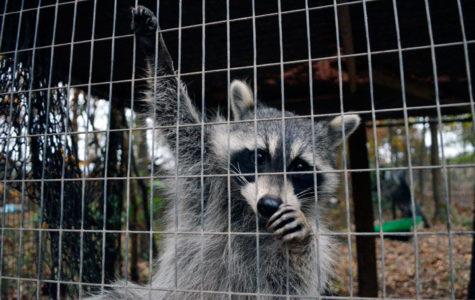 Free Again Wildlife Rehabilitation