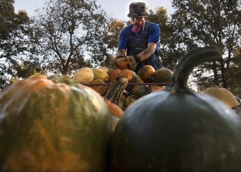Photo of the Day: Pumpkin stacking