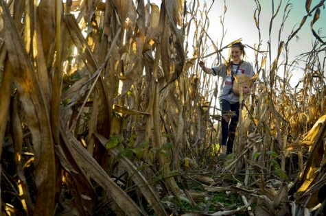 Photo of the Day: A Maze of Maize