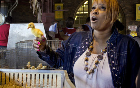Ducks Sold as Seasonal Pets at Soulard