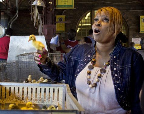 Ducks Sold as Seasonal Pets at Soulard