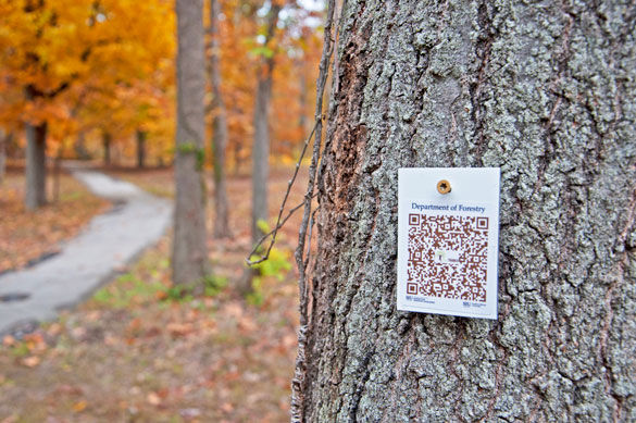A QR scanner code hangs on a tree along the path through Thompson Woods. The codes are being put up by a group of graduate students in the forestry program so that other students can scan the code and find information about that specific tree. Associate professor of forestry Jon Schoonover hopes to have the QR codes on 135 different species of trees throughout Thompson Woods.ALEXA ROGALS