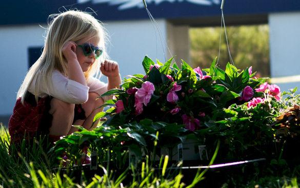 Picking plants