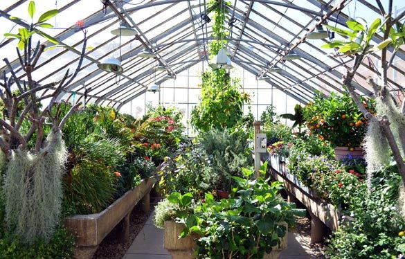 SIU greenhouse construction affects two colleges