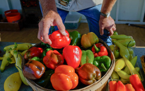 Homer Jenkins, of Murphysboro, sorts through an assortment of peppers Wednesday at the Carbondale Community Farmers Market. (Daily Egyptian File Photo)
