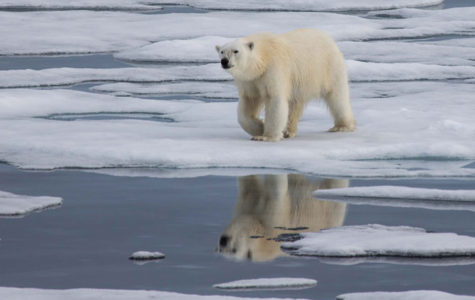 Earth sends more warnings about warming