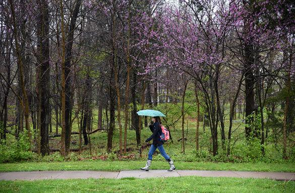 Becca Curtiss, a junior from Carol Stream studying zoology, walks across campus during a spring rain Monday near the Agriculture Building.