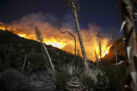 The Blue Cut fire continues to burn north of Lytle Creek on Friday in San Bernardino County, Calif. (Marcus Yam/Los Angeles Times/TNS)