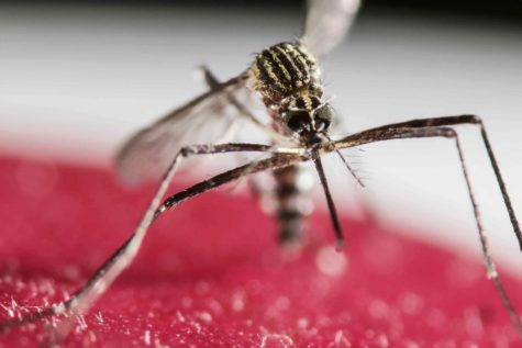 FDA recommends donated blood be tested for Zika virus