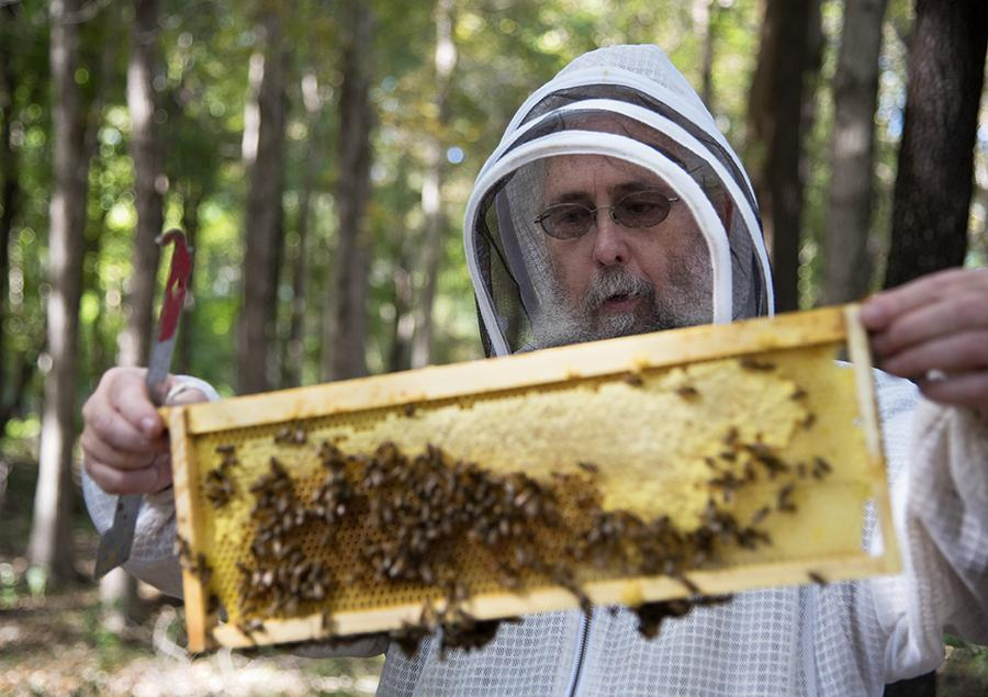 Author and beekeeper Michael Bush, of Nehawka, Neb., inspects one of the frames from inside a beehive Sunday, Oct. 9, 2016, during the Southern Illinois Treatment-Free Beekeeping Seminar Series at Touch of Nature Environmental Center in Makanda. Bush has been keeping bees since the mid-1970s and today owns about 40 hives.