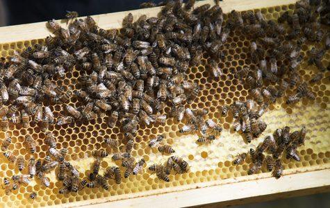 Three-day beekeeping seminar starts Friday