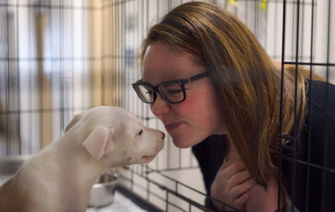 Amy Preston interacts with Izzy, a pit bull mix puppy, on Tuesday, Feb. 14, 2017, at St. Francis CARE Animal Shelter in Murphysboro. Preston began working for the shelter as an event coordinator in January 2016. Izzy was adopted by a new family that day. (Bill Lukitsch | @lukitsbill)
