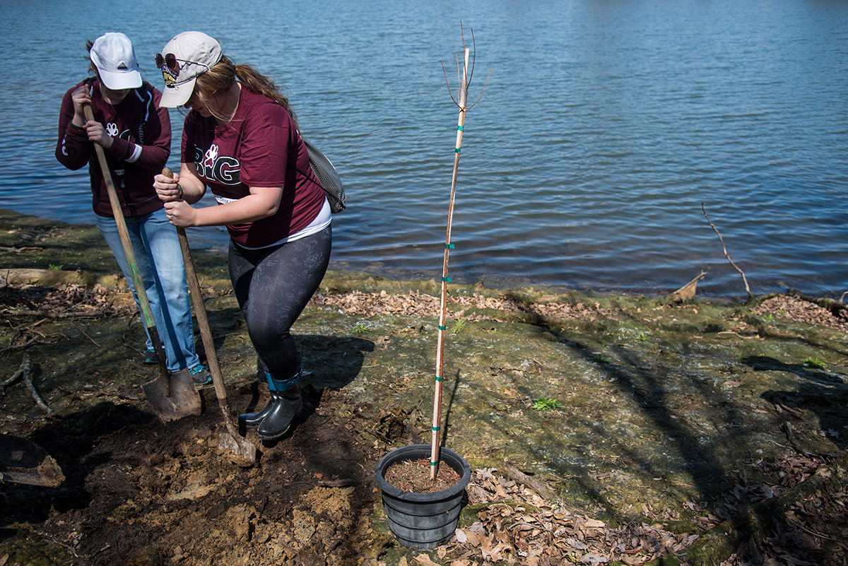 Sarah Barth, a senior from Jasper, Indiana, studying interior design, and Morgan Meinhart, a senior from Newton studying interior design, plant a Cypress tree Saturday, April 1, 2017, along the edge of Campus Lake. Bruce DeRuntz, director of the SIU Leadership Development Program, said 80 volunteers planted 40 trees while they volunteered during The Big Event on Saturday. Hundreds of SIU students took part in the day of service at various locations in Carbondale and the surrounding area. (Jacob Wiegand | @jawiegandphoto)
