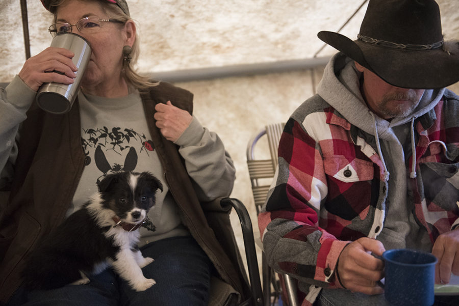 Terry Dawson, of Licking, Missouri, sips coffee alongside Mark Duncan, also of Licking, with her new Australian Shepherd puppy, named Shawnee, on Thursday, April 6, 2017, during the second annual McAllister and Friends Mule Ride at High Knob Campground in the Shawnee National Forest. (Morgan Timms | @Morgan_Timms)