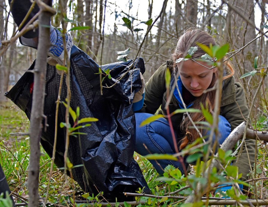 Amanda+Waltner%2C+a+freshman+from+Bloomington+studying+chemistry+and+math%2C+puts+garlic+mustard+plants+in+a+trash+bag+Saturday%2C+April+1%2C+2017%2C+as+part+of+a+campus-wide+volunteer+day.+This+was+SIU%E2%80%99s+first+time+participating+in+The+Big+Event+in+which+hundreds+of+students+took+part+in+the+day+of+service+at+various+locations+in+Carbondale+and+the+surrounding+area.%28Anna+Spoerre+%7C+%40annaspoerre%29