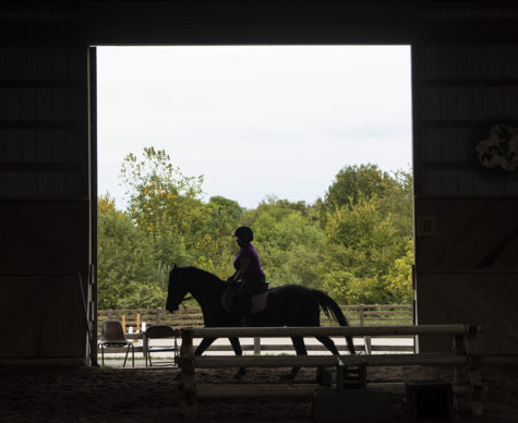 Photo of the Day: Dancing at the stables