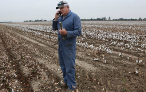 Missouri farmers wrestle with toll of widespread dicamba damage