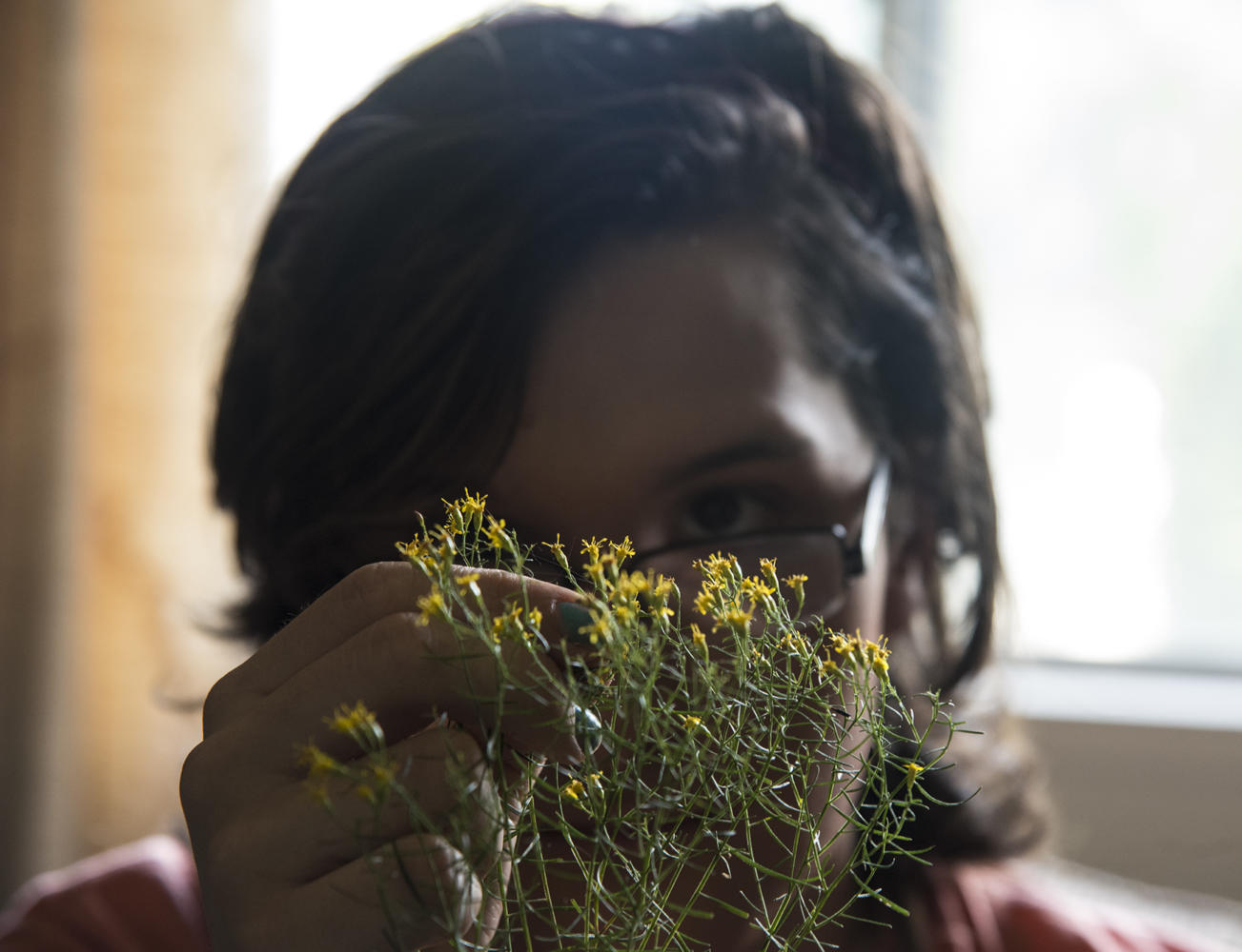 """Marisa Szubryt, a senior from Mokeno studying plant biology, examines the flower of a plant known as Euthamia Tuesday, Oct. 10, 2017, at her apartment in Carbondale. """"Working with the data has been really interesting in a way that I hadn't been exposed to before,"""" Szubryt said. """"That's all very exciting, being like, 'Okay, so this thing groups with this other thing, and oh, they look similar because of this and that's why."""" (Cory Ray  @coryray_de)"""