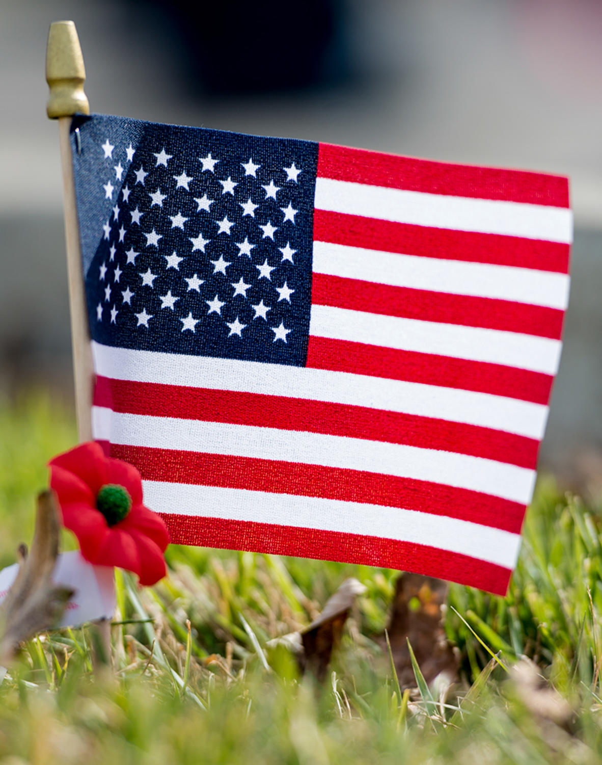 Gallery veterans day celebrations across southern illinois daily an american flag and a poppy are pictured saturday nov 11 2017 during the city of anna veterans day parade mary newman marynewmande publicscrutiny Gallery