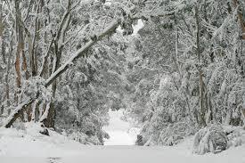 Winter Wonderland 2017 Benefit Gala