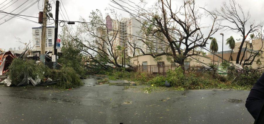 Trees and ruins in Condado, Puerto Rico.