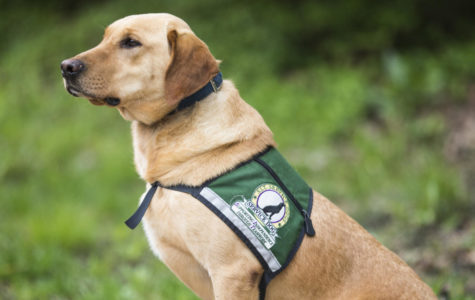 Service dogs to help students de-stress during 'Dawgs and Dogs'
