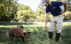 Andrew Banks reaches to pet a hog on the Five Hen Farm near Lick Creek, during the Annual Neighborhood Co-Op Farm Crawl on Saturday, Sept. 15 2018.