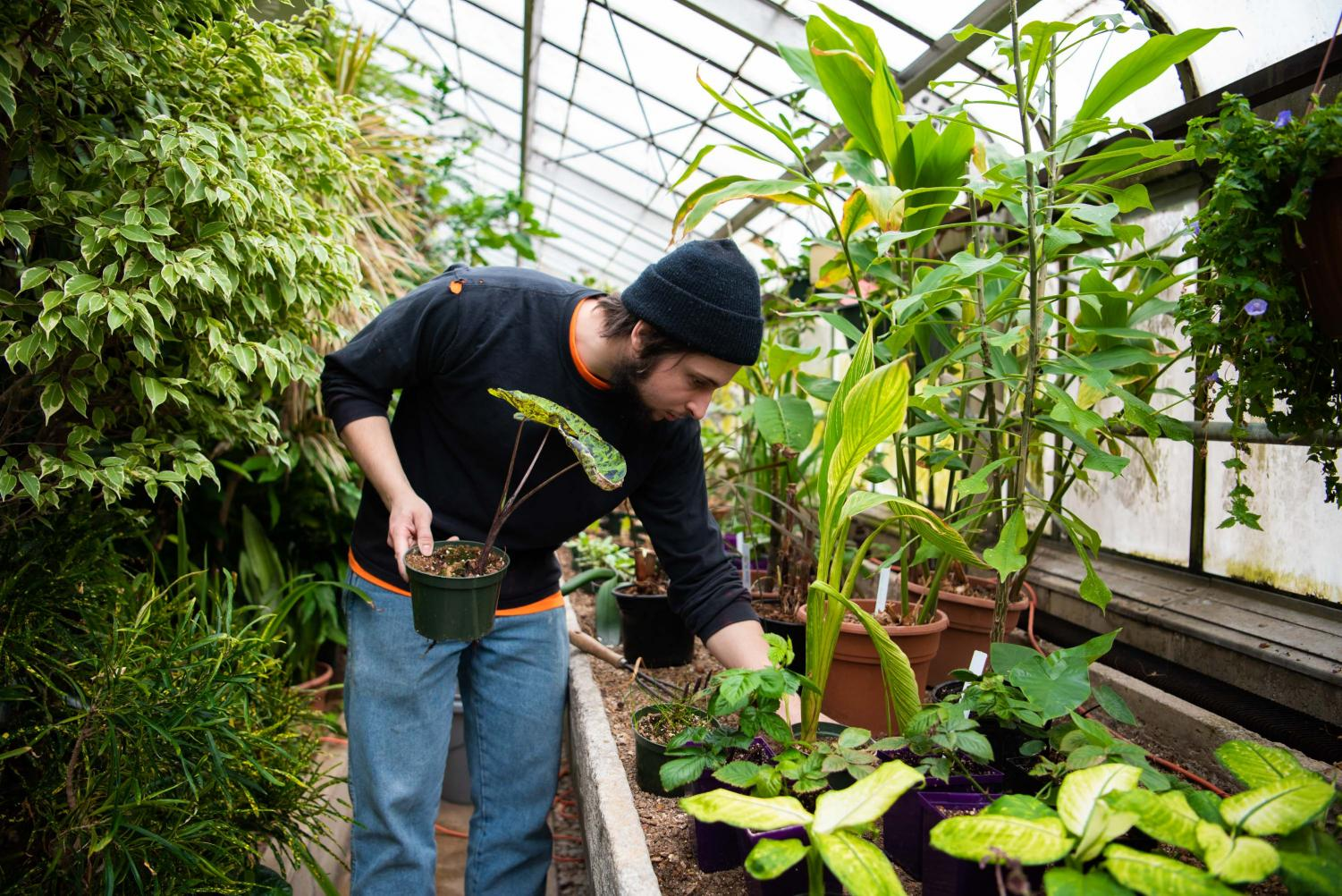 Jacob Janicki, a senior majoring in plant biology, prunes and places plants on Tuesday, Feb. 19, 2019 inside the Plant Biology Greenhouse and Conservatory. Janicki, a student worker, Is planning on working at the greenhouse next semester.
