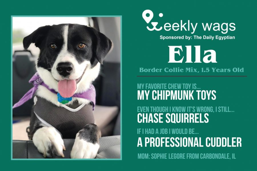Weekly Wags: Ella, Border Collie mix
