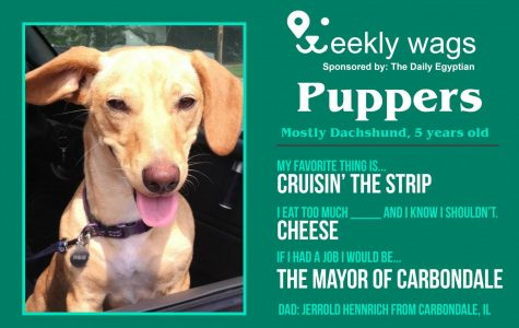 Weekly Wags: Puppers, Mostly Dachshund