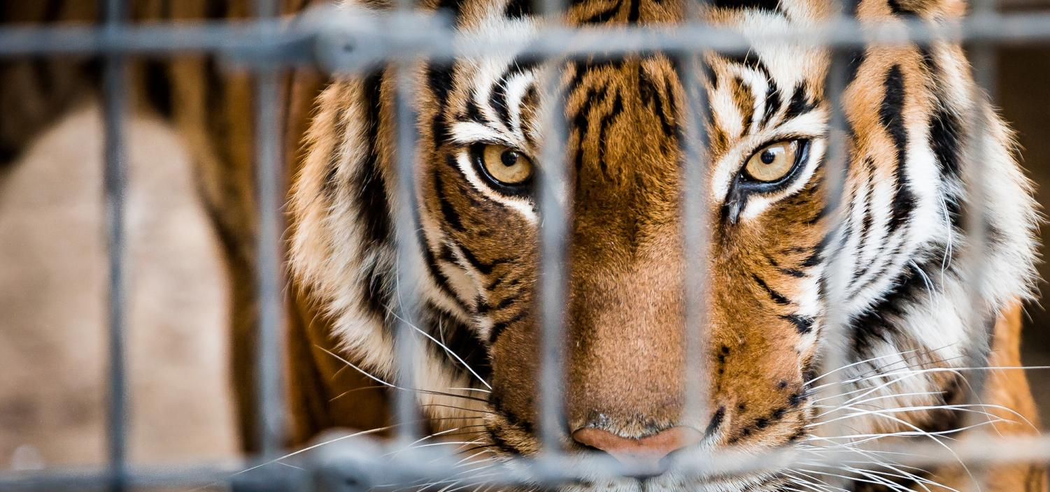 Don't stop at roadside zoos. (Dreamstime)