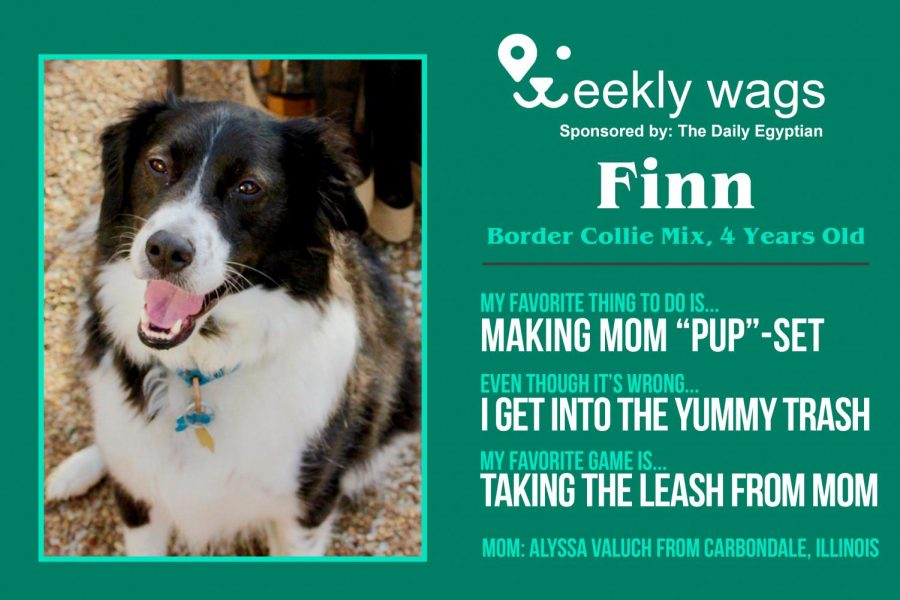 Weekly Wags: Finn, Border Collie Mix
