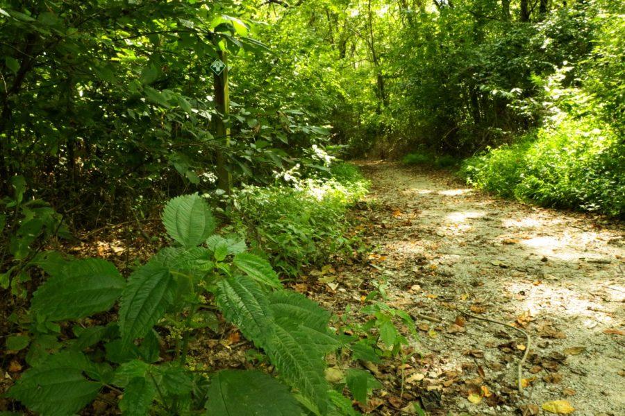 Hiking 101: Rocky Bluff Trail