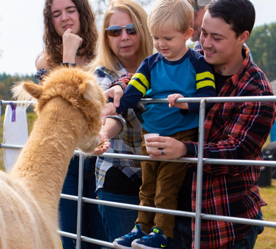 The Carter family feeding Maca the alpaca on Sunday, Oct. 20, 2019 during Alpaca and Wine at StarView Vineyards in Cobden, Illinois.