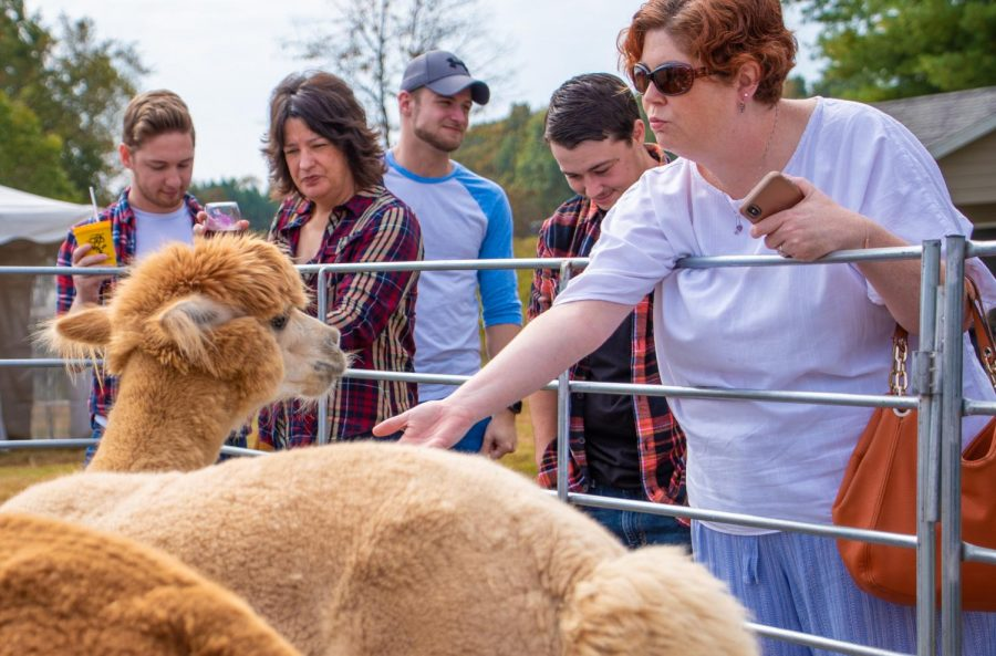 Kim Miller from St. Louis feeding Maca the alpaca on Sunday, Oct. 20, 2019 during Alpaca and Wine at StarView Vineyards in Cobden, Illinois.