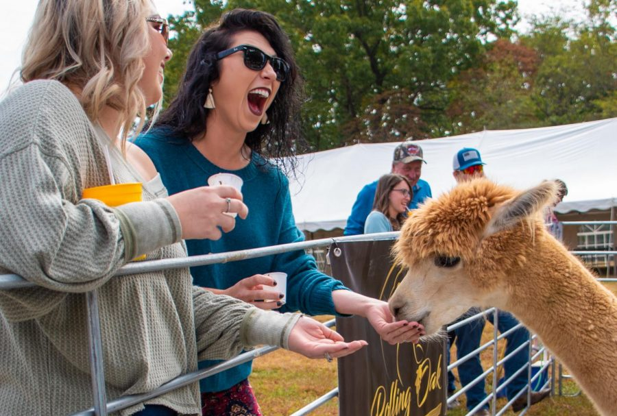Brittany Chhubb and Emily Holloway from Galton County feeding Maca the alpaca on Sunday, Oct. 20, 2019 during Alpaca and Wine at StarView Vineyards in Cobden, Illinois.