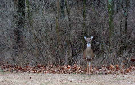 Photo of the Day: Campus critter sighting