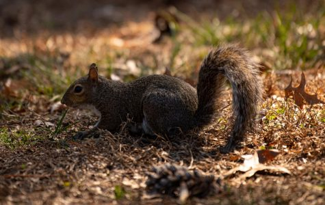 Photo of the Day: Squirreling Around