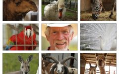 Alan Blumhorst, 60, is the owner of the Rainbow Ranch Petting Zoo, located on a 170-year-old, family-owned farm in Nashville, IL, and home to as many as 30-35 different species of exotic and traditional farm animals, totaling about 220 animals before mating season, and anywhere from 300-400 after the babies are born. Animals, clockwise from top-left:  Candy the Camel; a swan; Ziggy the Zebra; a white peacock; alpacas; Big Jake the Jacob Sheep; Skippy the Kangaroo; and Max the Macaw. Blumhorst uses alliteration when naming the animals on his farm because it helps the kids remember the animals.