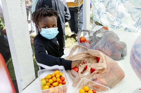 Zylon, 8, picks out some fresh tomatoes at the Big Event hosted by the Carbondale Women for Change on Saturday, Sept. 19, 2020. During this event, fresh garden vegetables from the Red Hen garden were given out to the community.