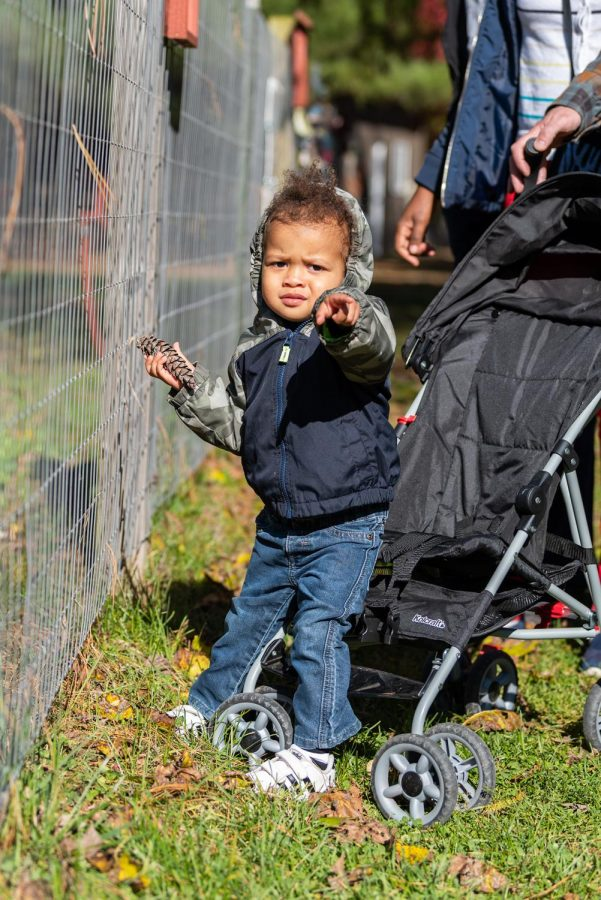 Elijah Otte points while looking at the coyotes at the Treehouse Wildlife Center's first-ever, Owl-A-Ween Saturday, Oct. 31, 2020.