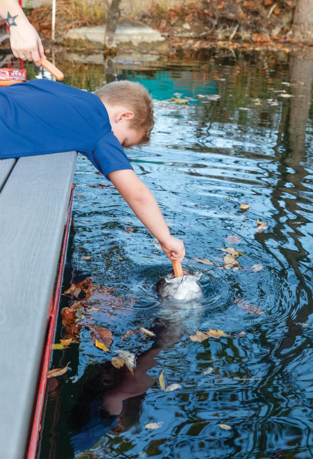 """Landen Robison, 7, feeds a catfish a hotdog on a dock at Mermet Springs Thursday, Oct. 22, 2020. """"I've never really seen a place that you can go scuba diving like this before,"""" Landen's mom, Haley Robison said. She has been bringing her son to see the fish in the quarry. """"His favorite thing in the world is fish,""""  Haley Robison said. Having just learned to swim, Landen Robison is looking forward to being able to swim with the fish. """"Next spring, I get to snorkel here,"""" Landen Robison said. Having been to Mermet Springs one time the previous weekend, Robison was excited to go back and told his mom that he was sure the fish were hungry."""