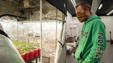 "Jacob Bucknam, the owner of Soil Grown, tends to CBD plants inside a tented greenhouse Saturday, Nov. 14, 2020, in Carbondale, Ill. ""We grow and harvest and sell our own CBD flowers. This is just one of the beginning phases of it. We've had the place since February but COVID affected us pretty hard as far as getting the doors open. We didn't really open the doors until July and ya know we're just now starting to see an uptick in sales as people are finding out we're here,"" Bucknam said."
